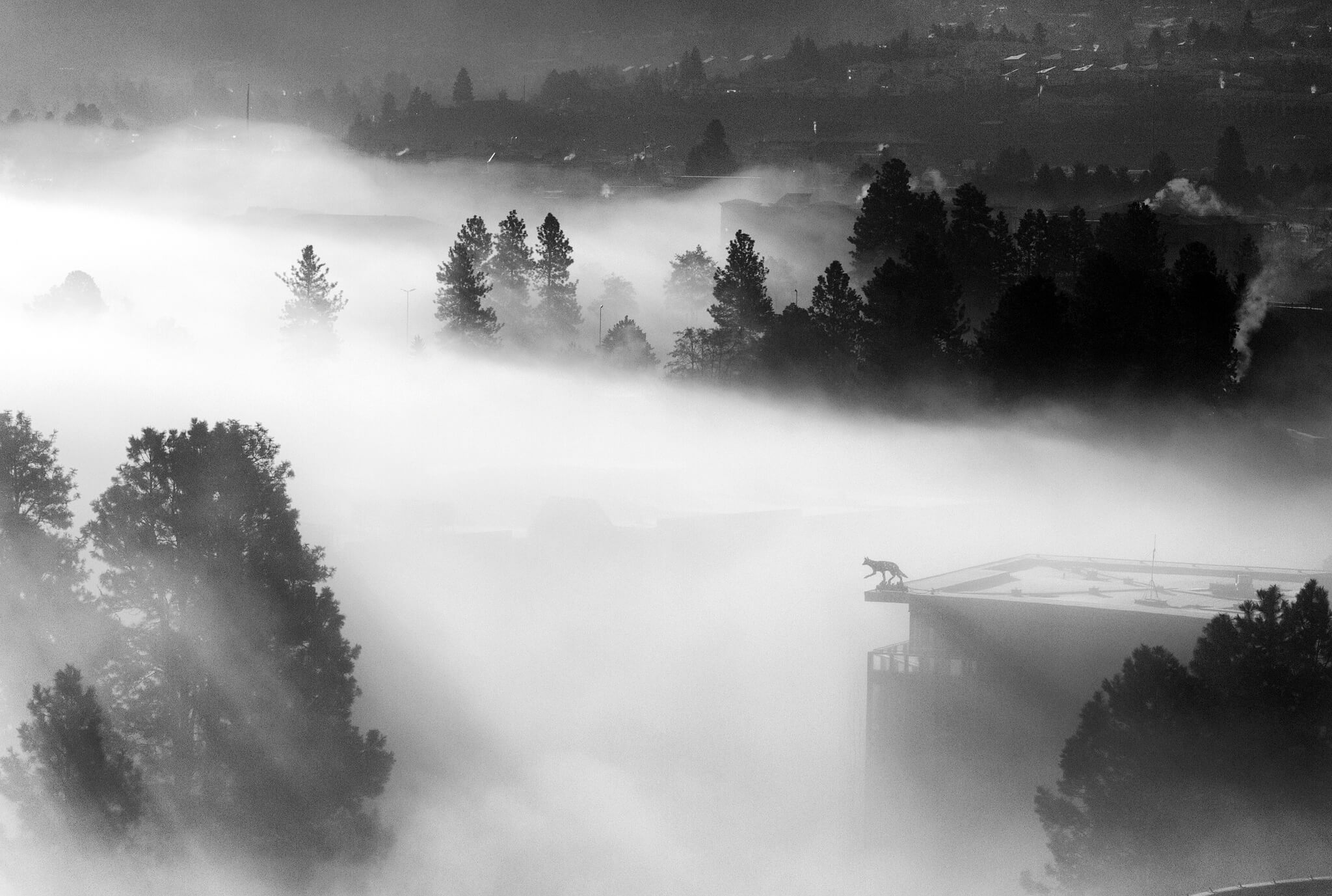 photo of fog viewed from 11th floor of a building