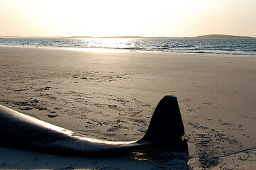 photo of a mermaid tail on the beach