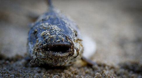 photo of dead fish