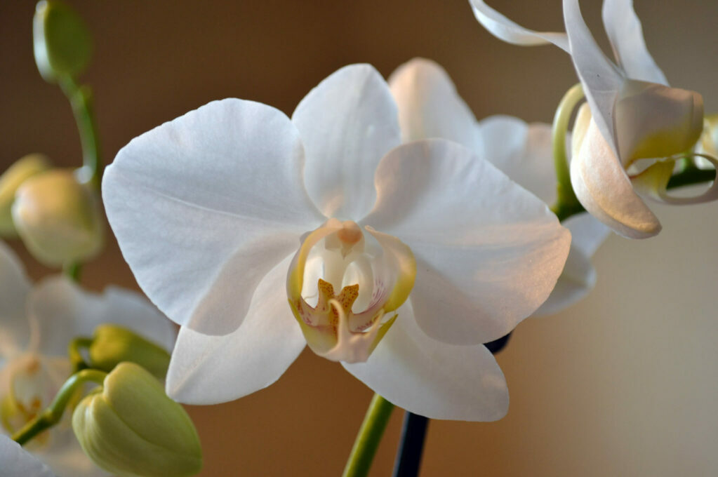 photo of white orchid