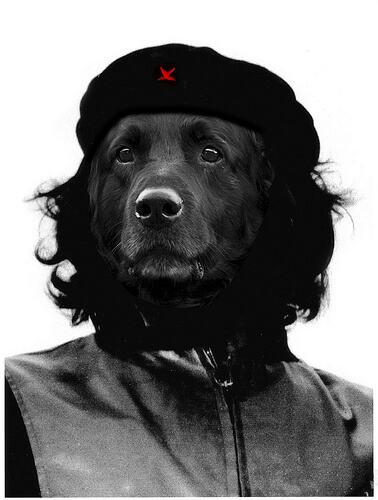 * DOG REVOLUTION *