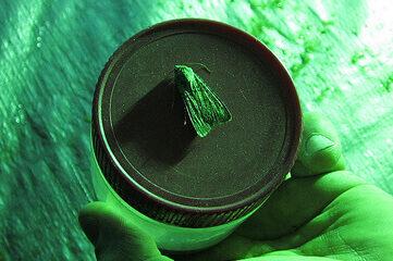 photo of a moth on a jar