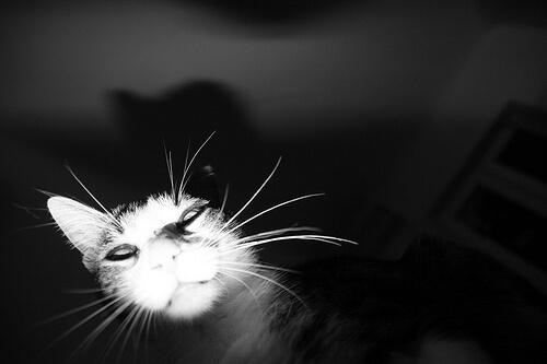 creepy cat 2