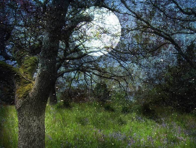 picture of a field at night underneath a full moon