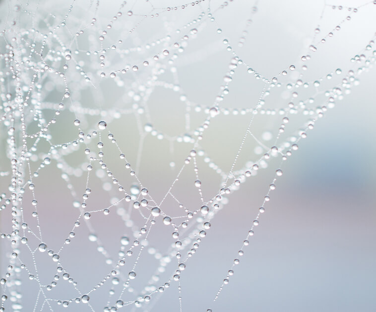 photograph of spiderweb with droplets on the threads
