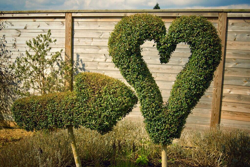 photo of heart-shaped topiary