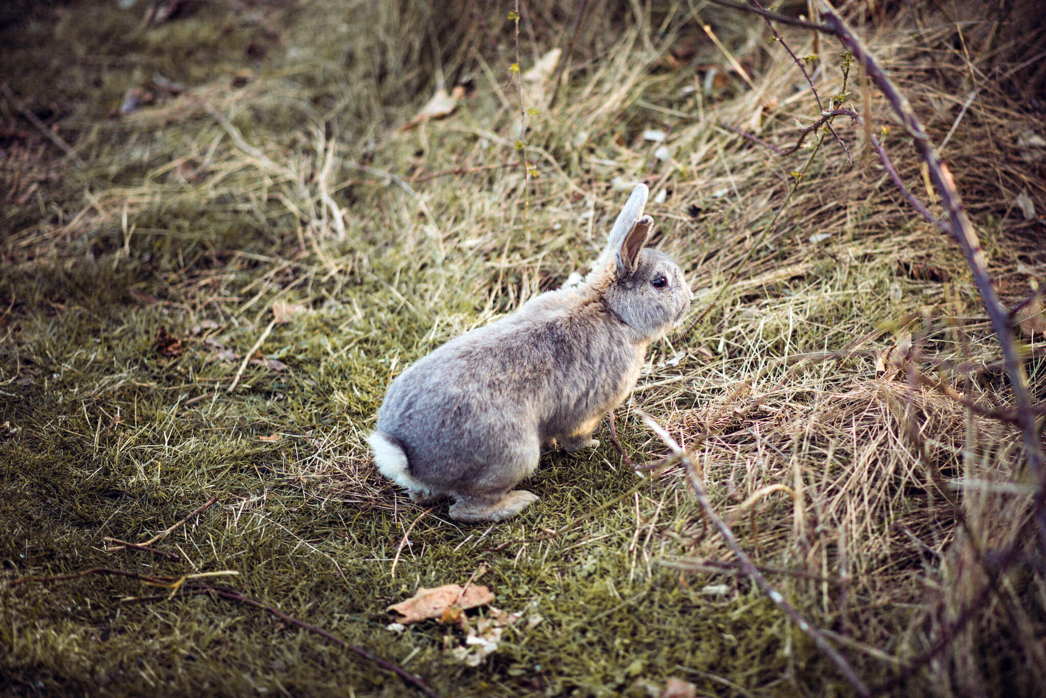 photo of rabbit
