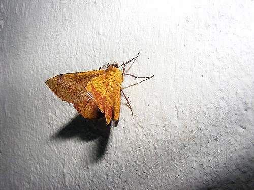 photo of moth
