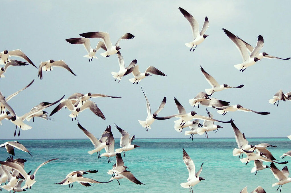 photo of seagulls