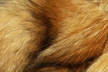 photo of fox fur