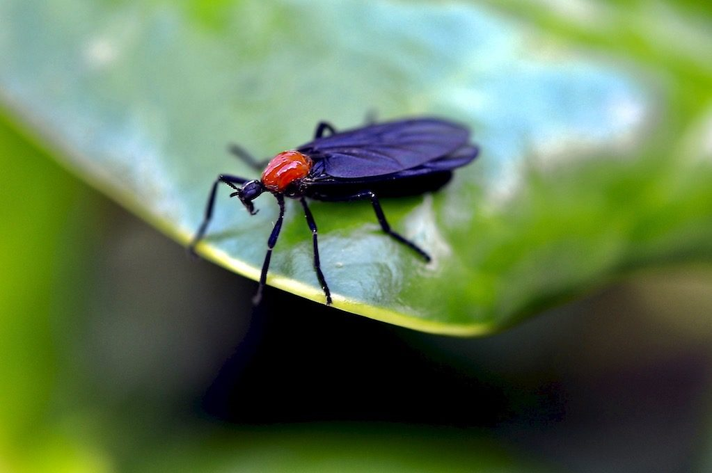 photo of lovebug